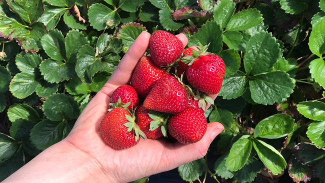 Best Weight Loss Foods - Berries