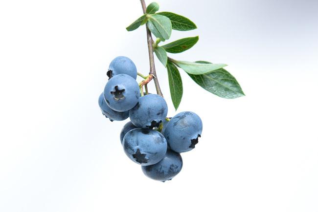 Brain Food Blueberries